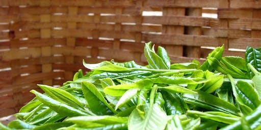 European Tea Show - I tè indiani di alta qualità: Kevin Gascoyne