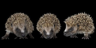 The Dorset Hedgehog Conference