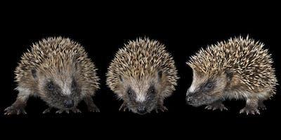 The Dorset Hedgehog Conference