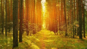 """Science On Tap: """"A Path in the Woods"""""""