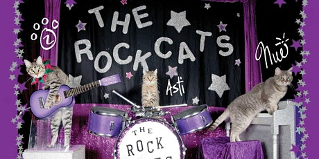The Amazing Acro-cats Astound Athens! tickets