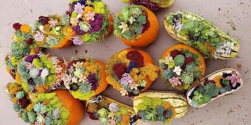 Succulent Pumpkin Workshop (Folsom)