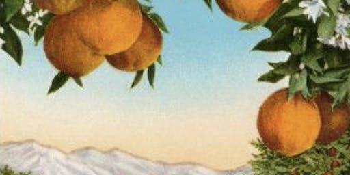 Winter Orange Groves