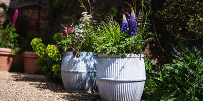 Stylish Summer Containers