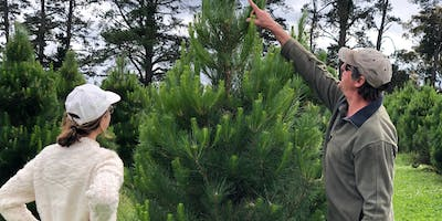 Pick Your Own Christmas Tree at S&P Dominello Flower Growers 24November