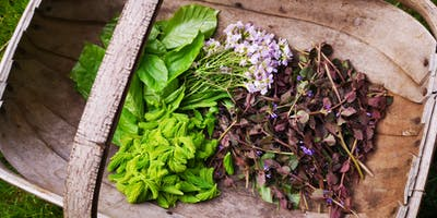 Spring Foraging Walk - Brighton