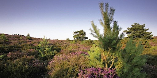Hyde's Heath Uncovered at RSPB Arne