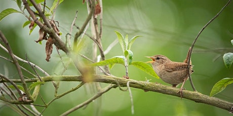 CANCELLED Not quite the Dawn Chorus at RSPB Arne tickets