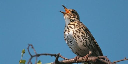 International Dawn Chorus Day Walk at RSPB Arne