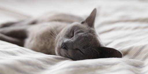 Restful Sleep Programme - runs over 4 weeks