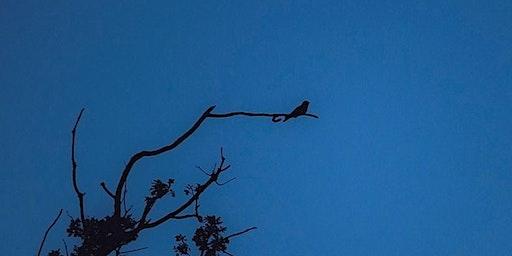 Nightjar Walks at RSPB Arne