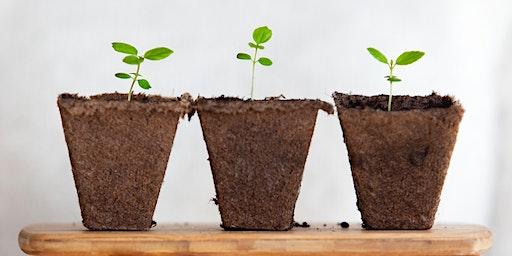 Healing Your Soil: Bio-remedial Plants