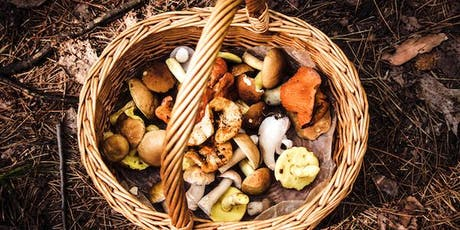 Foraging Walk and Lunch tickets