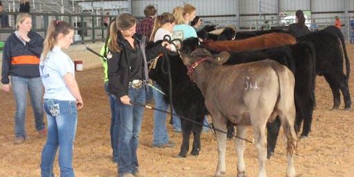 7th Annual 4-H Steer and Heifer Showmanship Showdown Clinic