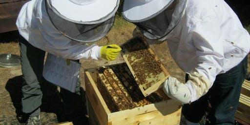 Beekeeping Equipment Workshop November 17