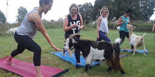 November Greedy Goat Farm Yoga