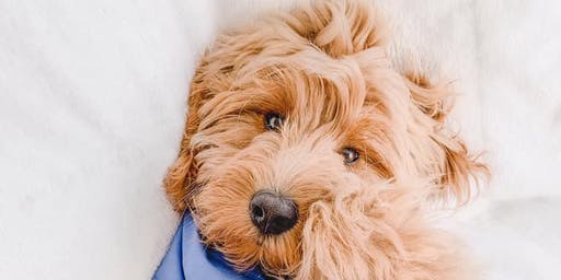 Golden Doodles Of New England's Annual Holiday Party