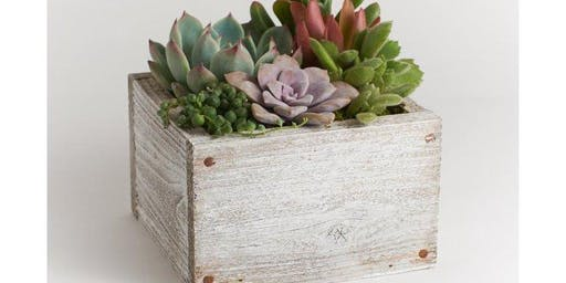 Winter Succulent Woodbox Planter Workshop at True Food Kitchen