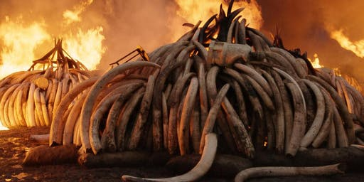 Proiezione del docufilm Anthropocene: the human epoch