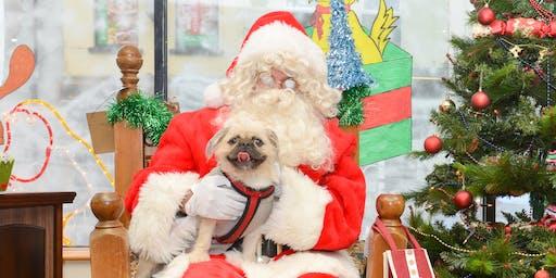 Santa Paws - Bring your cat or dog to see Santa!