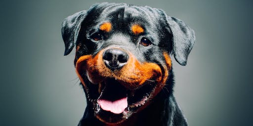 The Power of Choice: How It Can Decrease Stress in Dogs