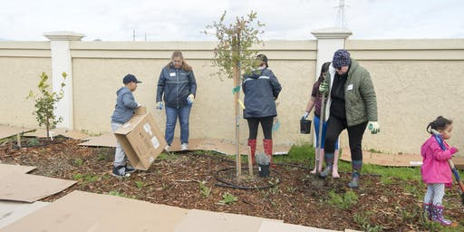 Final Urban Forest Tree Planting