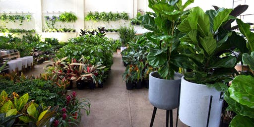 Huge Indoor Plant + Pot Warehouse Sale - Pop Up Shop