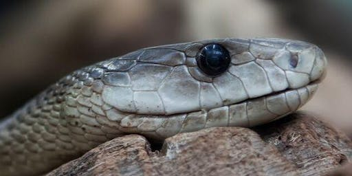 Insight into snakes