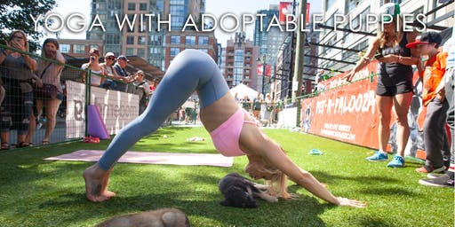 Yoga with adoptable puppies