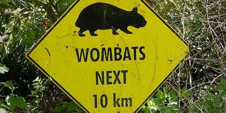 Summer School Holiday Program - Felt Wombat tickets