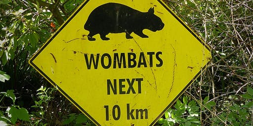 Summer School Holiday Program - Felt Wombat