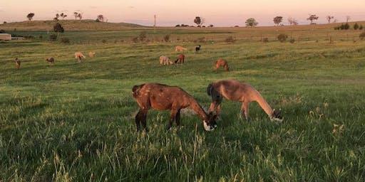 Alpaca Farm Tour - The Alpaca Journey