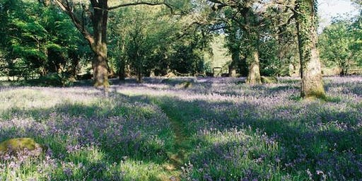 Bluebell Woodland Walk and Lunch
