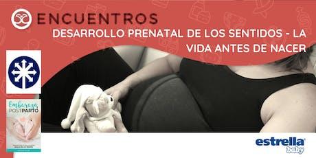 Encuentros - Desarrollo Prenatal de los Sentidos - La vida antes de nacer entradas