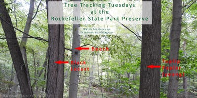Tree Tracking Tuesday