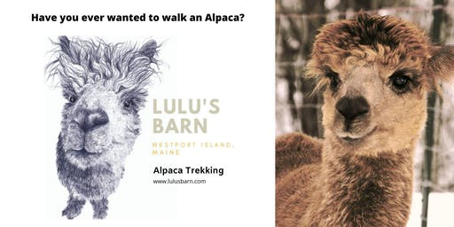 Alpaca Trekking
