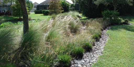 Copy of Drought Tolerant Plants 101