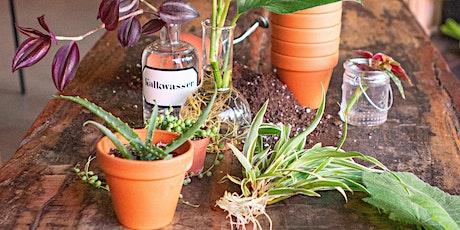 Pflanzenliebe - Stecklinge ziehen Tickets