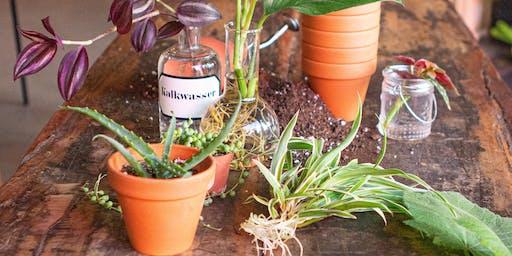 Pflanzenliebe - Stecklinge ziehen