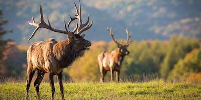 """Run For The Elk"" Half Marathon, 5k/10k & 2Mile Sprint"
