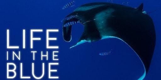 Ocean Talks and Movie Night