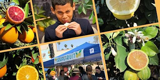 California Citrus State Historic Park's Annual Citrus Tasting and Family Festival