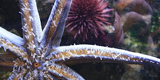 Super Sea Stars: Mini Explorers (ages 3-5)