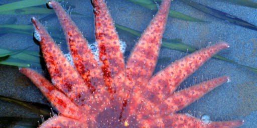 The prickly-skinned Echinoderms: Junior Ecologists (ages 6-9)