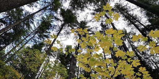 The Hidden Life of Trees: Forest Ethics