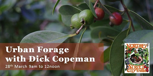 Urban Forage with Dick Copeman