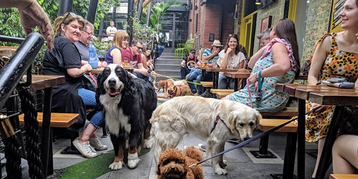 Abbotsford Puppy Pub Crawl - from Jungle to Rooftop
