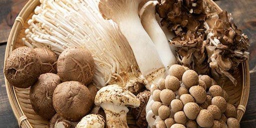All About Mushrooms!
