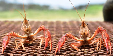 Crawfish & Music Festival tickets