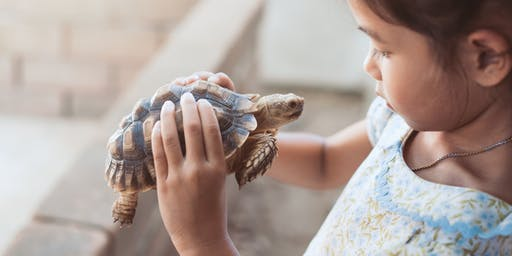Walkabout Reptile Show (5 to 12 years) at Constitution Hill Library